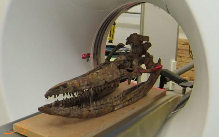 اسرار جمجمه هیولای دریایی، 60 سال پس از کشف آن فاش شد